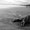 Some driftwood, Monkey Island Beach, New Zealand