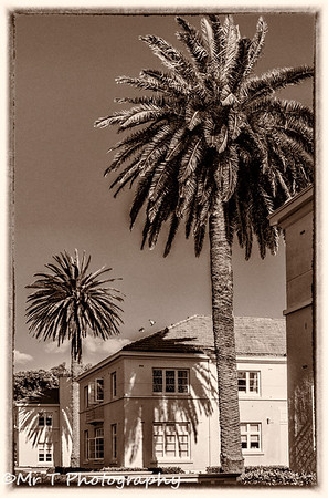 Palm trees Mission Bay