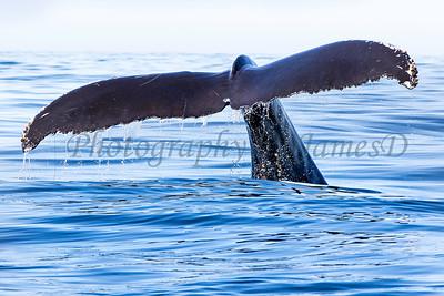 Whale Tail 20190912_G04A7142(36x24)print