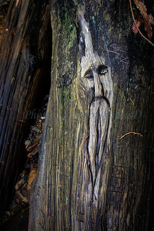 Old Man In Tree 20190123_170_(24x16)print