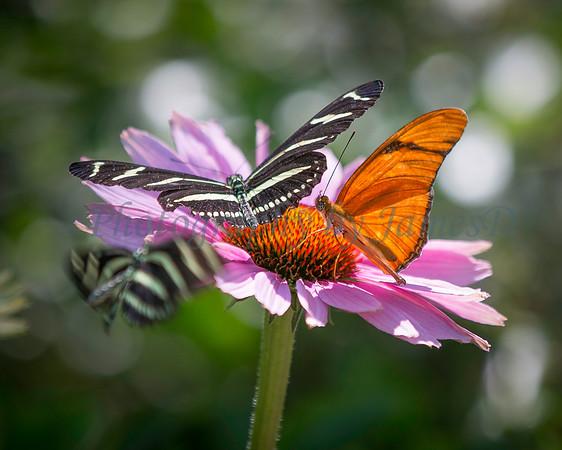 Butterflies on Flower