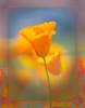 Flower Child (20160406)