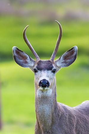 Lopez Lake Animals 20161112-905