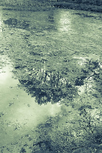 Trees reflected in pond, Sebilius Monument. Helsinki, Finland