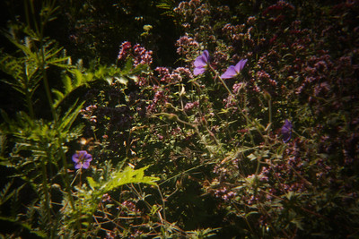 Backyard Flowers.  Ishpeming.
