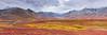 Denali National Park Autumn Colors Panorama
