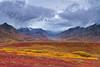 Denali National Park Autumn Colors