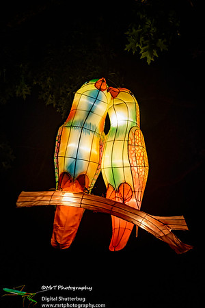 Love birds Lantern Festival 2017 Auckland Domain