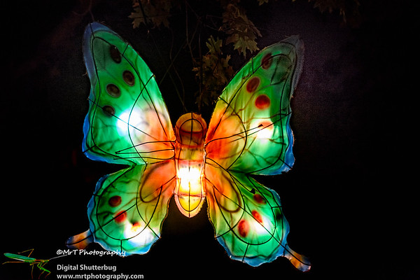 Butterfly Lantern Festival 2017 Auckland Domain