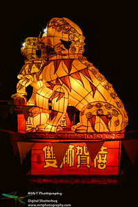 Foo dogs Lantern Festival 2017 Auckland Domain