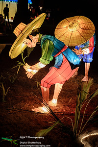 Rice planting Lantern Festival 2017 Auckland Domain