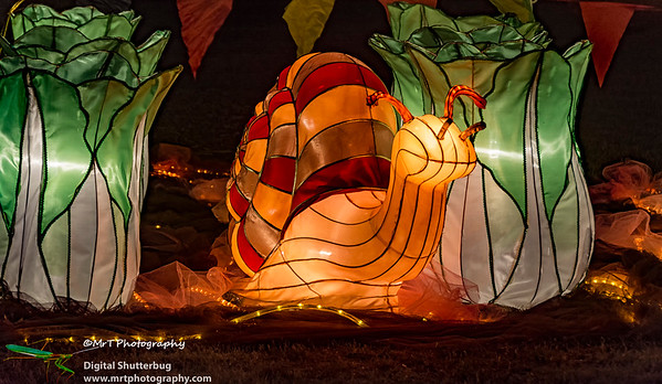 Snail heaven Lantern Festival 2017 Auckland Domain