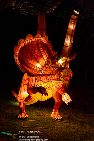 Triceratops Lantern Festival 2017 Auckland Domain