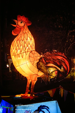 The year of the Rooster Lantern Festival 2017 Auckland Domain