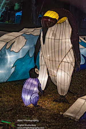Mum and baby penguins Lantern Festival 2017 Auckland Domain