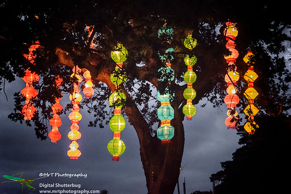 Hanging from the tree Lantern Festival 2017 Auckland Domain