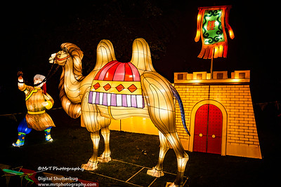 The dogs bark, the caravans pass Lantern Festival 2017 Auckland Domain