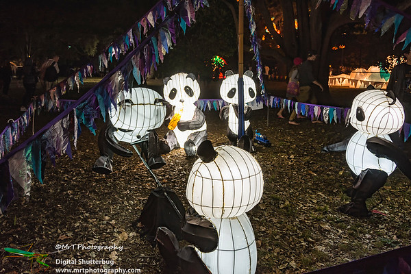 Pandas Lantern Festival 2017 Auckland Domain