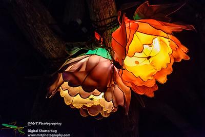 Flowers Lantern Festival 2017 Auckland Domain