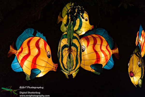 Tropical fish Lantern Festival 2017 Auckland Domain