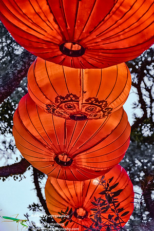 Red lanterns Lantern Festival 2017 Auckland Domain