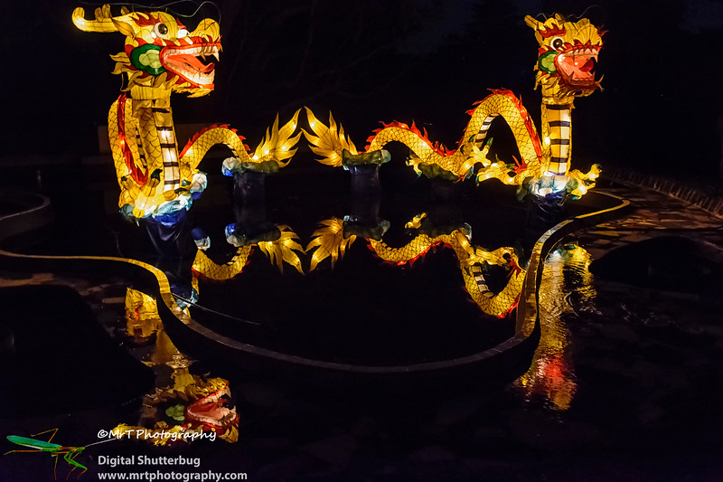 Dragon reflections Lantern Festival 2017 Auckland Domain