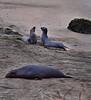 Three Seals, Near San Simeon, CA (Pentax 645)