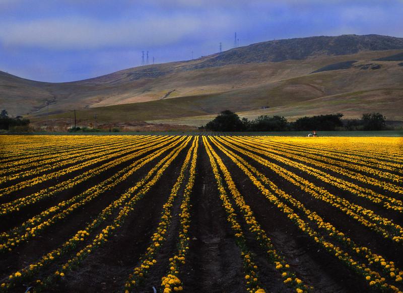 Down a Field, San Luis Obispo, CA (Pentax)