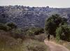 Downhill, Upper Sage Trail, Daley Ranch, Escondido (Pentax 645)