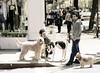 Dogs, Bleecker Street, NY, NY