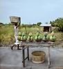 Fruit Vendor, Roadside, Ada, Ghana