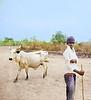 Cattle Herder, River Delta, Ada, Ghana