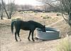 Black Horse, Kit Carson Road, Taos, NM