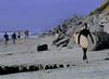 Walking, Swami's Beach