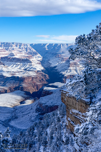 Canyon In Snow And Shadows
