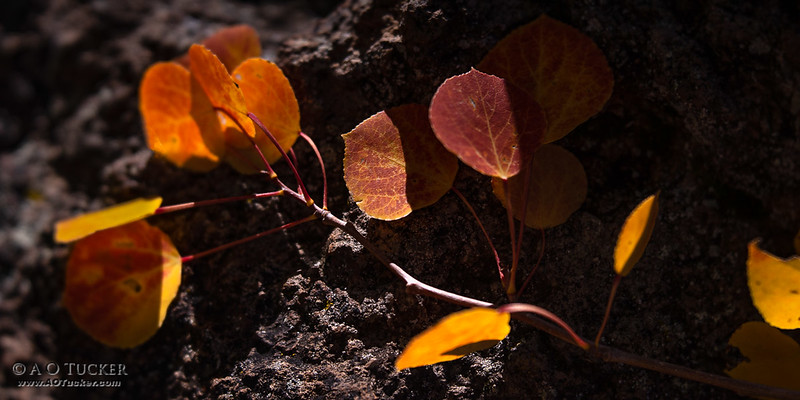 Amber Leaves Flowing Over Volcanic Rock