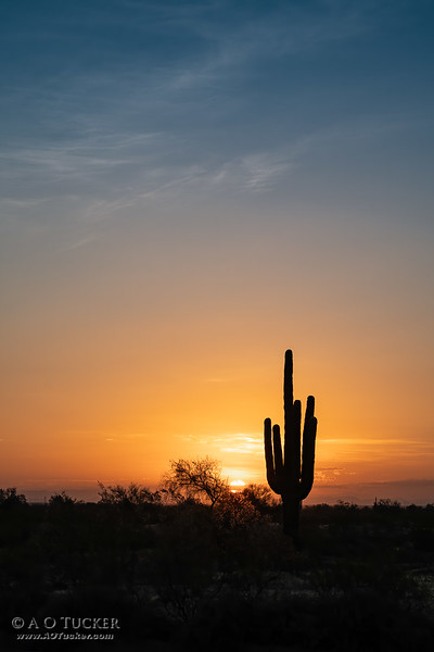 Blazing Saguaro Sunrise