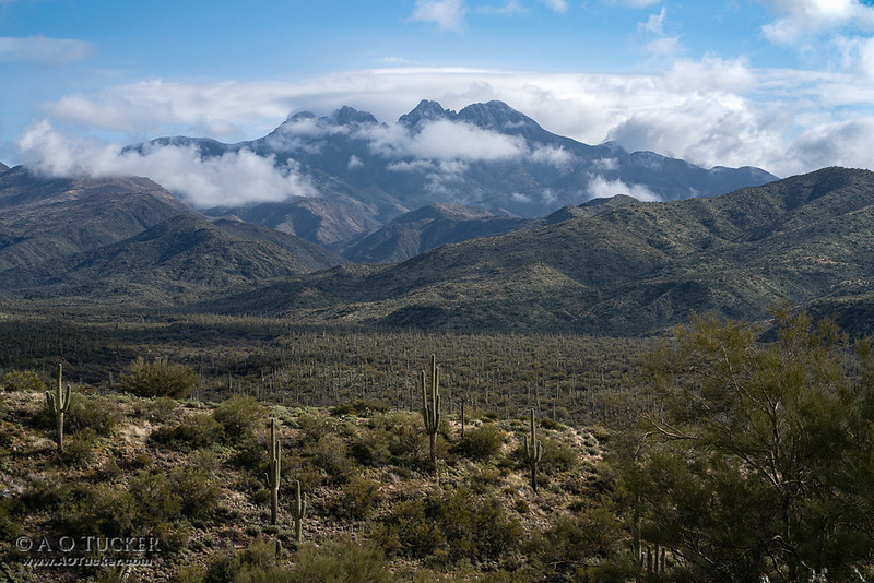 Four Peaks Rising Up From A Forest Of Saguaros