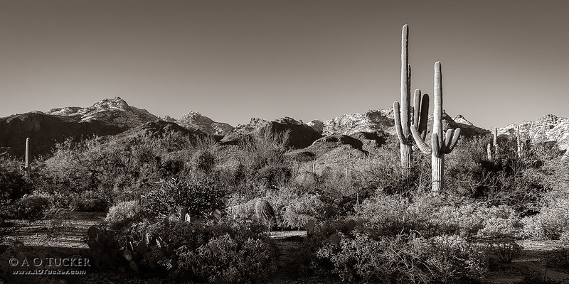Sabino Canyon Panoramic - B&W