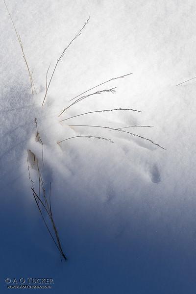 Winter Simplicity 7