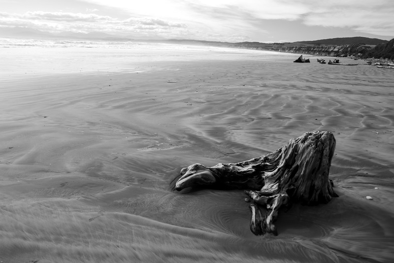 Some driftwood, Monkey Island Beach