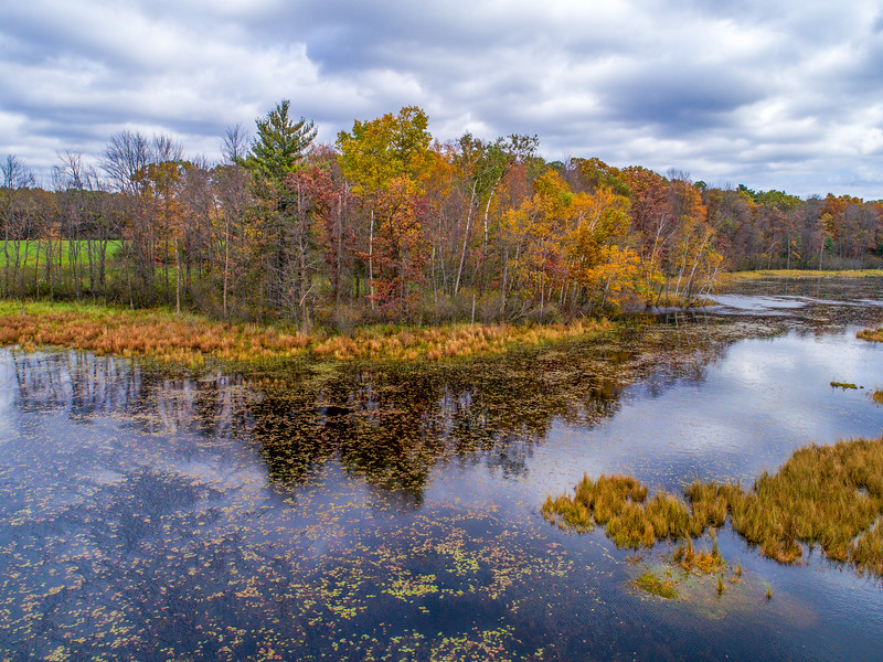 Fall foliage down by the pond.