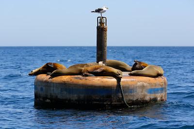 Catalina Island Buoy