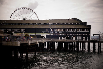 Seattle Aquarium and the Great Wheel