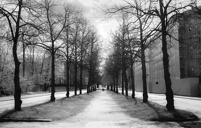 Trees along Mechelininkatu St, Helsinki, Finland.