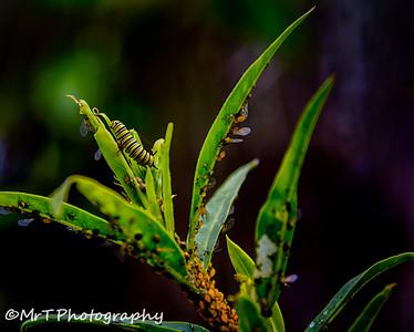 Caterpillar Henderson