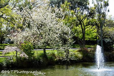 Pond in springtime Auckland Domain