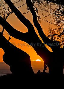 Sunset Silhouette (20100915)