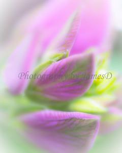 Flowers 20170320-424-Edit