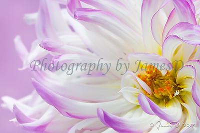 Flowers 20110812-7